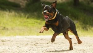 Dog Bite Animal Attacks